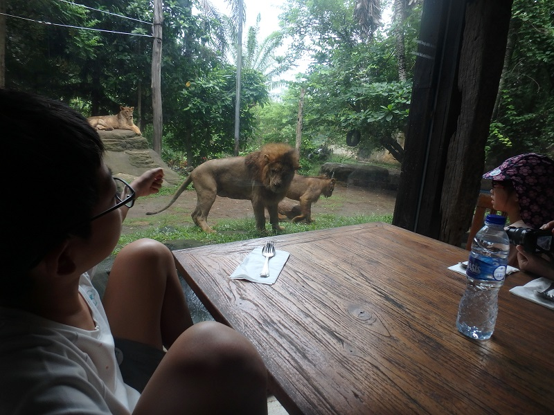 ライオンが見られるレストラン